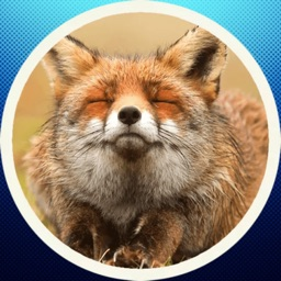 Funny Fox! Stickers