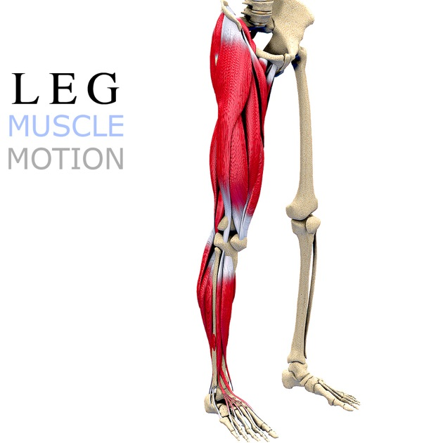 Leg Muscles Motion On The Mac App Store