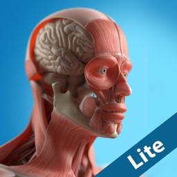 Anatomy Game Anatomicus Lite