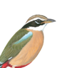 eGuide to Birds of the Indian Subcontinent