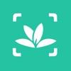 植物识别-拍照识花草树木
