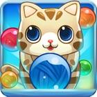Kitty Cat Pet Run icon