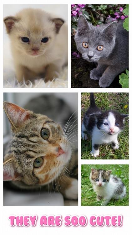 Cat Kitten Jigsaw Puzzle Games