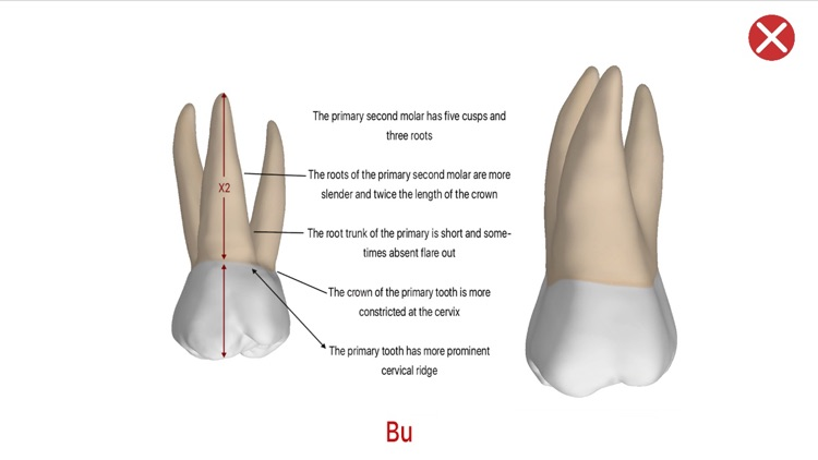 Dental Corpus Primary screenshot-4