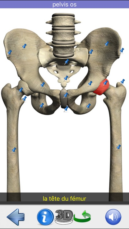 Anatomie Visuel screenshot-5