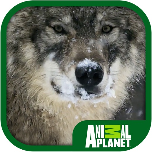 Animal Planet: Wolves