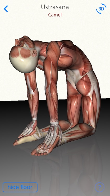 3D Yoga Anatomy screenshot-2