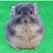 TimePic龙猫宠物语言翻译器