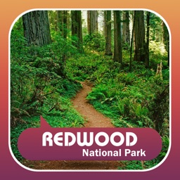 Visit Redwood National Park