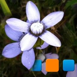 Explorer for Picasa Pro