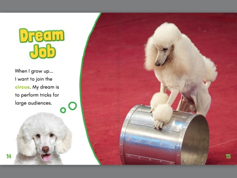 Poodle Puppy Books Free Wiring Diagram For You