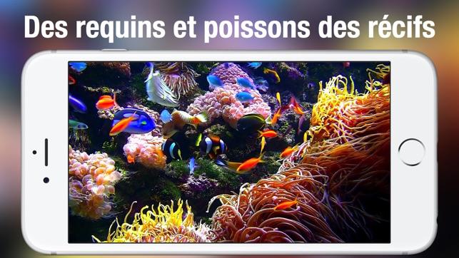 Fond D écran Poisson Qui Bouge Gratuit
