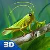 蚱蜢昆虫生活模拟器3D