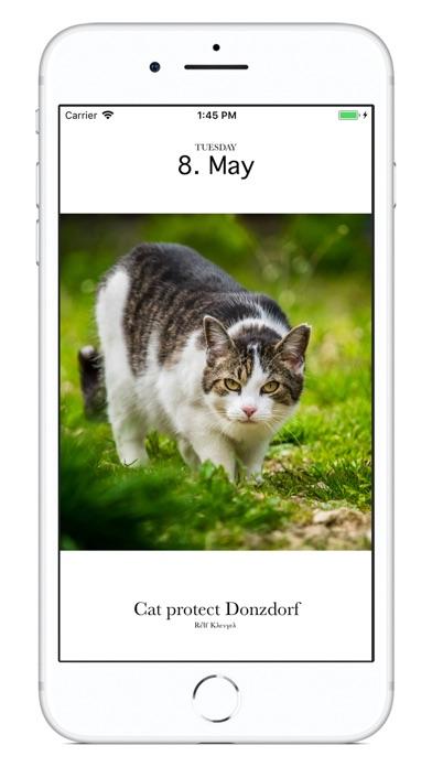 Cat Calendar 2018 screenshot 2