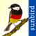 Alle Vögel Deutschland