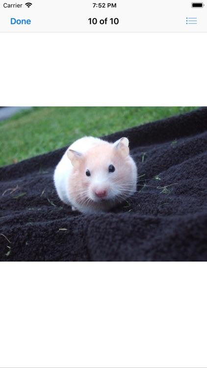 Hamster Sticker Pack screenshot-9
