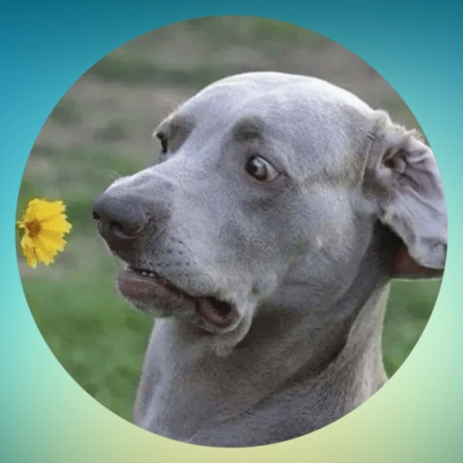 Stupids Dogs! Stickers