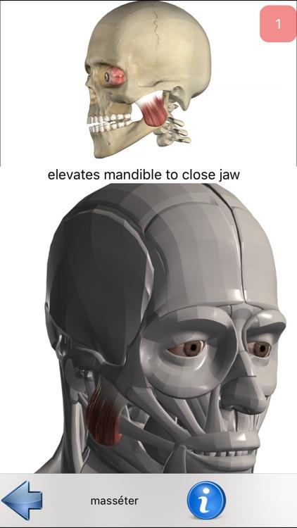 Anatomie Visuel screenshot-3