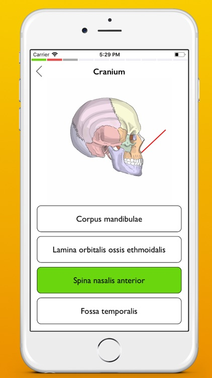 Osteology screenshot-6