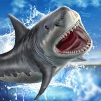 Codes for Shark Slide Racing 2018 Hack