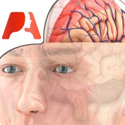 Ícone do app Pocket Brain – Neuroanatomia Interativa