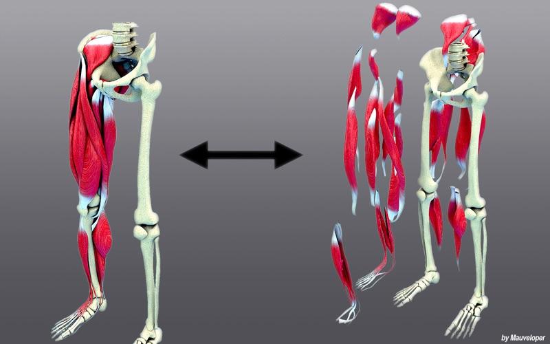 Leg Muscles Motion скриншот программы 2