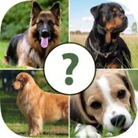 Codes for Pups Pet Trivia Pro Hack