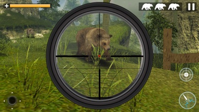 Bear Jungle Attack app image