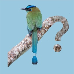 Panama Birds Field Guide
