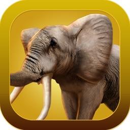 陆生动物园AR