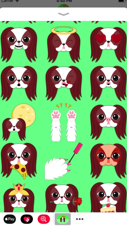 Red Sable Japanese Chin