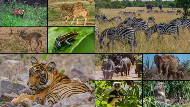 WorldView: Wildlife screenshot-4