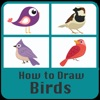 How to draw Birds Step by step