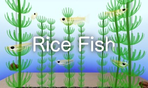 Rice Fish AR/VR
