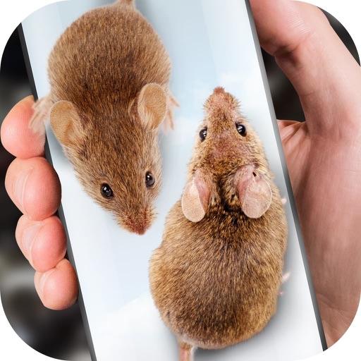 Maus auf dem Bildschirm Witz