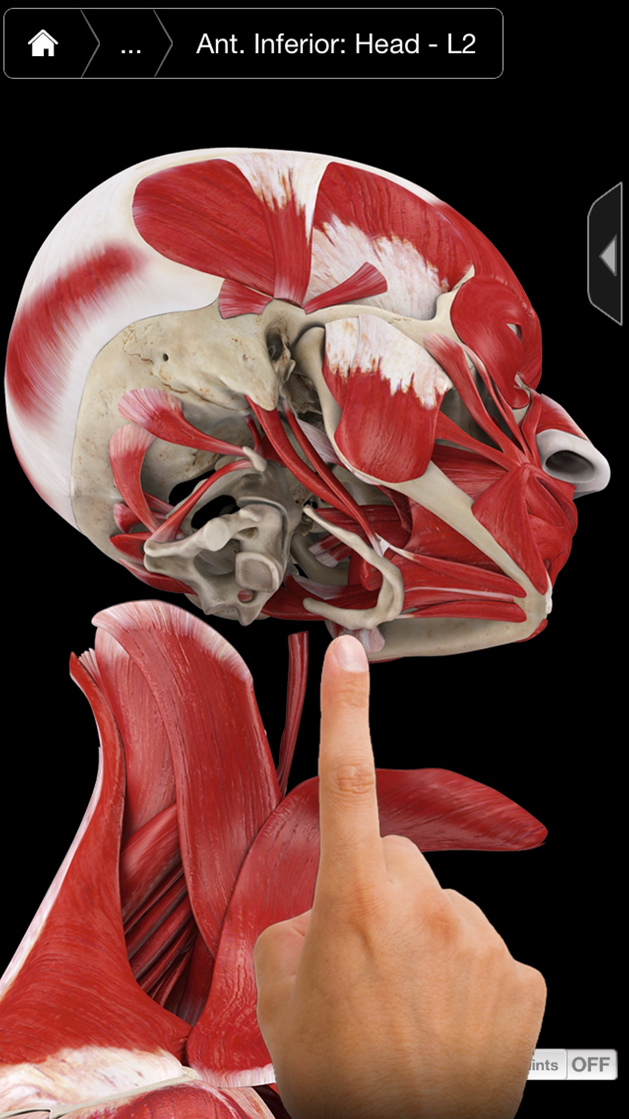Muscle System Pro III - iPhone Screenshot