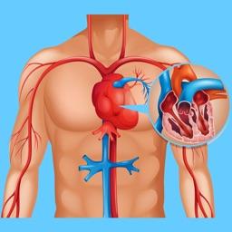 Cardiovascular System Biology