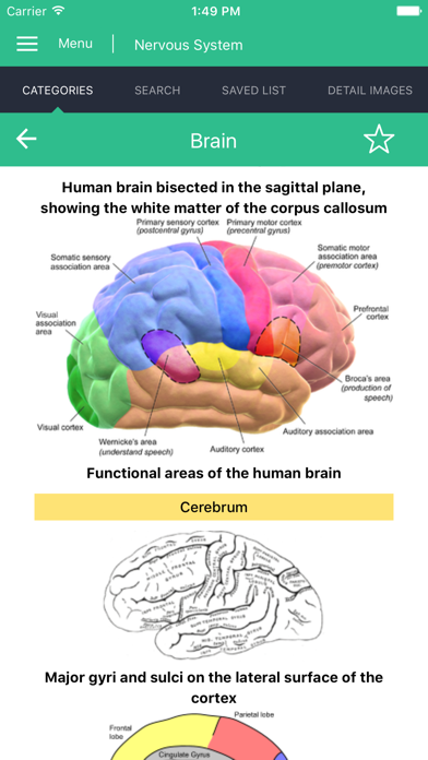 Nervous System Reference Guide screenshot three