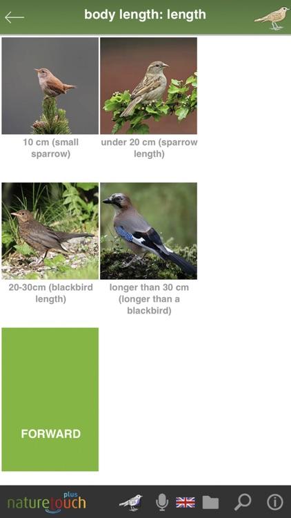Identify live bird songs screenshot-5
