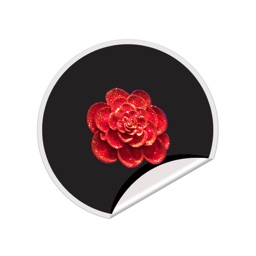 365 Days of Love Rose Stickers
