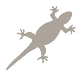 Fieldstone Guide: Reptiles