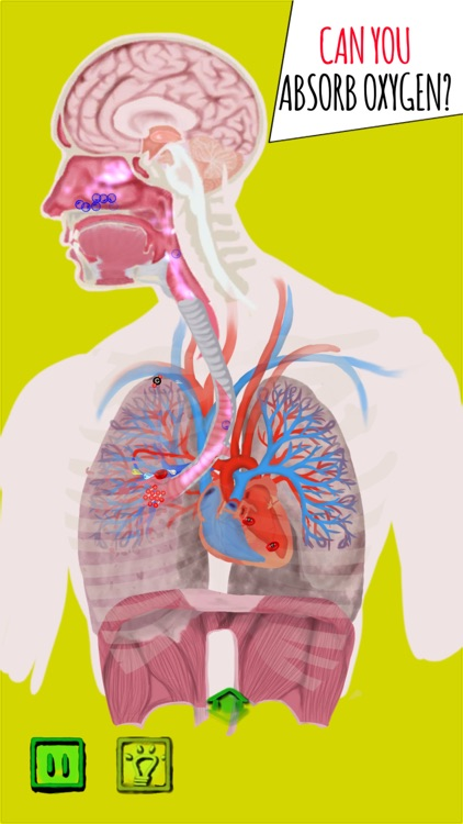 Inside The Human Body by Frank Servy