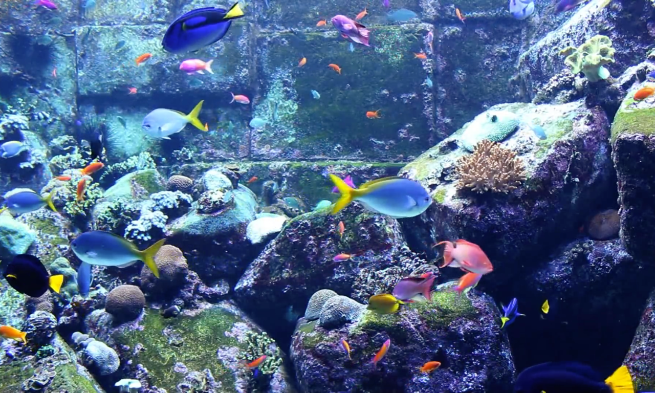 Real Aquariums HD
