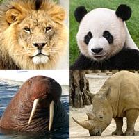 Codes for Animal Quiz: Mammals and Birds Hack