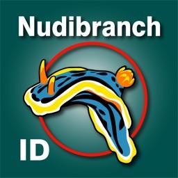 Nudibranch ID Western Atlantic