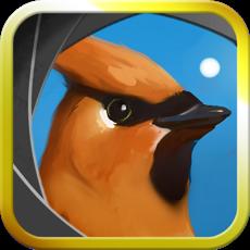 Activities of Camera Birds™