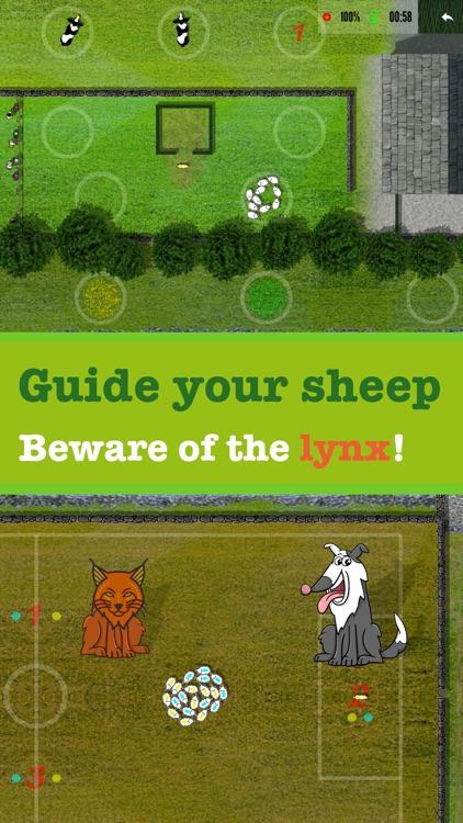Sheep dog Championship