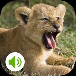 Animal Sound-动物叫声