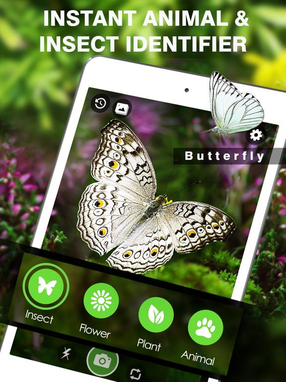 Smart Identifier: Plant+Insect screenshot 7