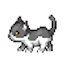 Activities of Run Kitty Kitty Run